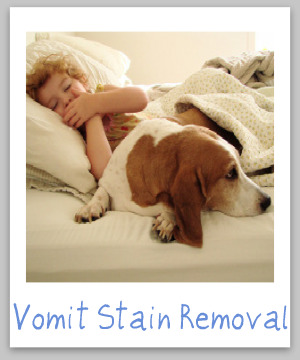 how to remove vomit on carpet